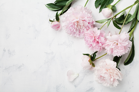 Beautiful pink peony flowers on white table with copy space for your text top view and flat lay style.