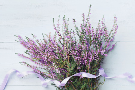 Bouquet of heather (calluna vulgaris, erica, ling) decorated satin ribbon on blue vintage background from above. Beautiful pink flower for greeting card. Фото со стока