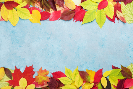 Colorful autumn leaves background banner top view. Fall sale mockup. Copy space for text. Stock Photo