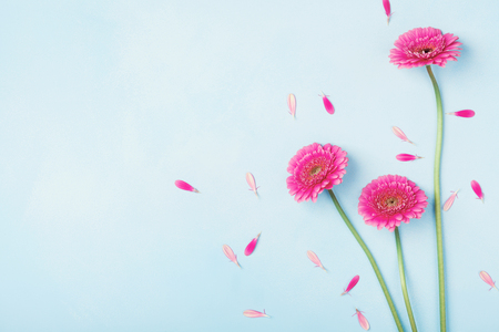Beautiful spring pink flowers on blue pastel table top view. Floral border. Flat lay style. Stockfoto