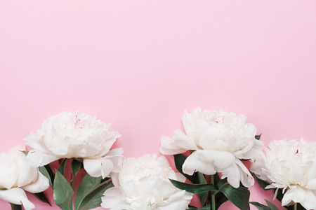Beautiful white peony flowers on pink pastel table top view and flat lay style. Floral border for Womens day card. Stock Photo