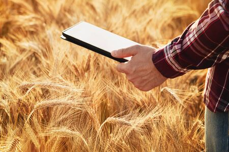 Farmer at cereal field with digital tablet in hand. The use of modern computer technology for the calculation, monitoring and planning of agricultural produce.