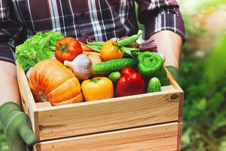 Farmer holds in hands wooden box with autumn crop of organic vegetables and roots against backyard background. Imagens
