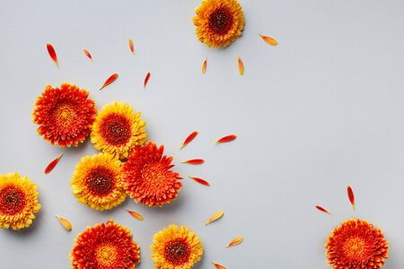 Creative nature composition of beautiful yellow and orange gerbera flowers with petals on gray background. Autumn concept. Flat lay. Greeting card. Imagens