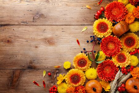 Autumn background with orange and yellow gerbera flowers, red berries, decorative pumpkins, wheat ears. Nature composition for Thanksgiving day on wooden table top view.