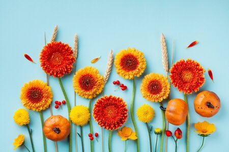 Creative autumn composition with orange and yellow gerbera flowers, decorative pumpkins, wheat ears on blue background top view. Thanksgiving day concept. Flat lay.