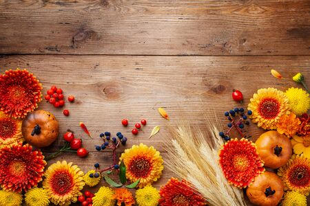 Autumn frame with orange and yellow gerbera flowers, decorative pumpkins, wheat ears. Beautiful nature composition for Thanksgiving day on wooden table top view.