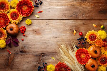 Autumn background with orange and yellow gerbera flowers, decorative pumpkins, berries, wheat ears. Composition for Thanksgiving day on wooden table top view. Imagens - 130489708