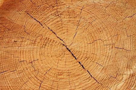 Textur des Holzes