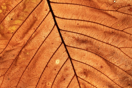 Leaf closeup Stock Photo - 10996392