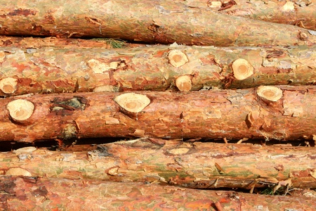 Pine logs photo