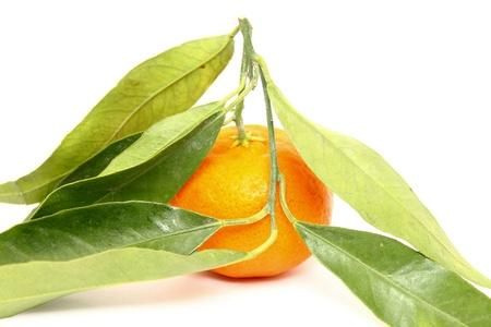 mandarins: Juicy mandarin with green leaves