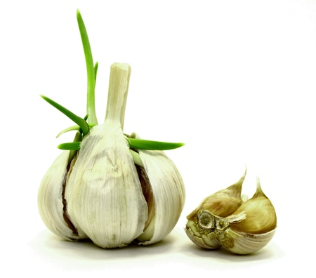 sprouting garlic on a white background Stock Photo - 13247608