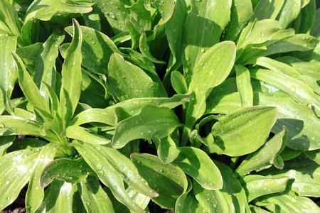 Green wet grass photo