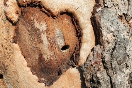 Abstract heart on a tree photo