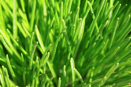 Green grass Stock Photo - 13317394