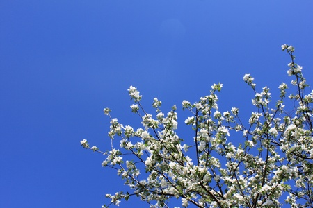 Spring flowers against the blue sky photo