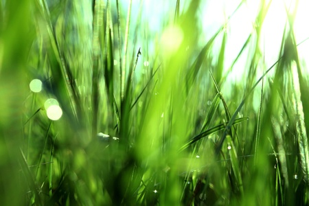 Green grass with dew in the morning Stock Photo - 13466955