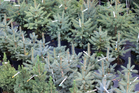 Some beautiful trees Stock Photo - 14828793