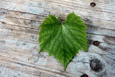 leaf grape: hoja de uva hermosa en un fondo de madera