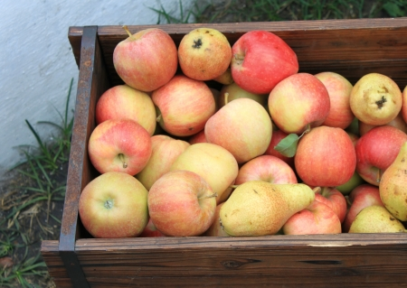 Harvest of ripe apples and pears photo