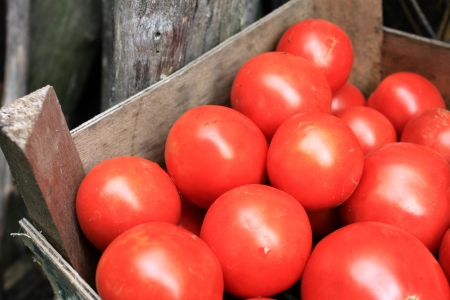 some red tomatoes in wooden box photo