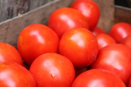 some red tomatoes in wooden box Stock Photo - 14929820