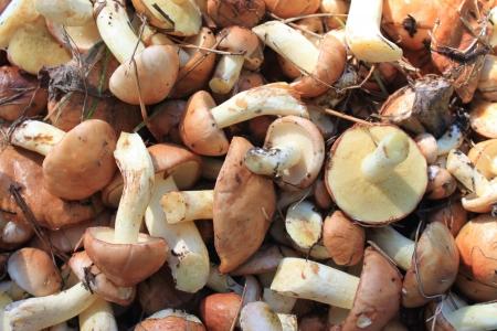many beautiful mushrooms photo