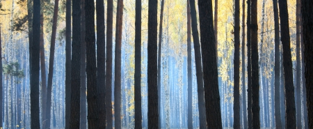 dark autumn forest with fog photo