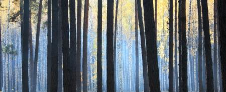 monochroom: donkere herfst bos met mist Stockfoto