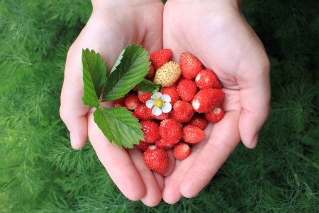 hands holding fresh berries photo