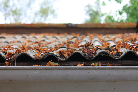 Lots of autumn leaves on a roof
