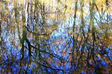 woodsy: Beautiful autumn in the forest. Reflection of trees in the water