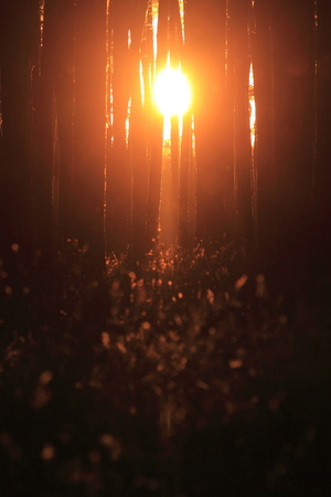 magical forest: Beautiful sunset in a mystical magical forest