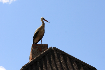 roof ridge: Beautiful white stork on the roof with brick chimney Stock Photo