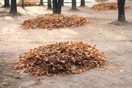 hojas antiguas: Hojas de otoño en la hermosa caída, montón de hojas secas en tiempo del otoño