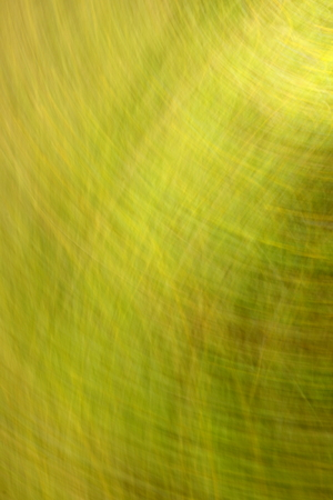 predominance: blurred colored background with a predominance of green summer color