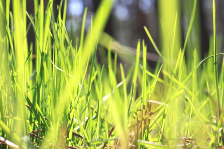 summer landscape with green grass on a forest background  blur of sharpness