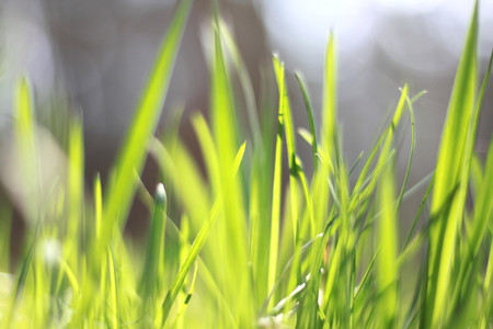 summer landscape with green grass on a forest background  blur of sharpness and bokeh