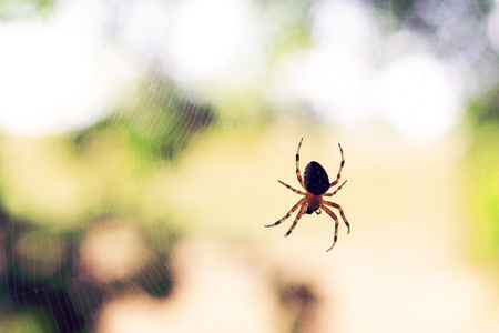 Lonely predatory spider Stock Photo