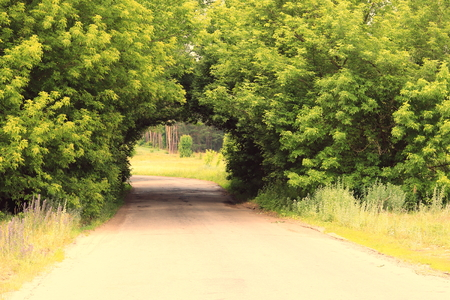 Beautiful natural arch, similar to tunnel, over rural road in summer in good weather