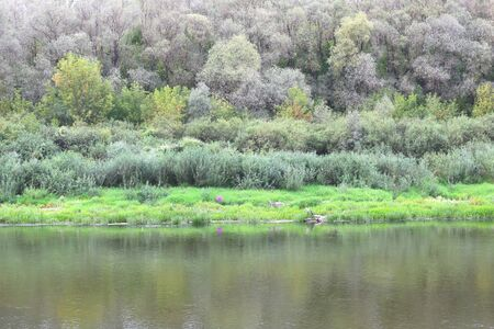 River bed in summer on background of green grass and green trees in fine weather Stockfoto