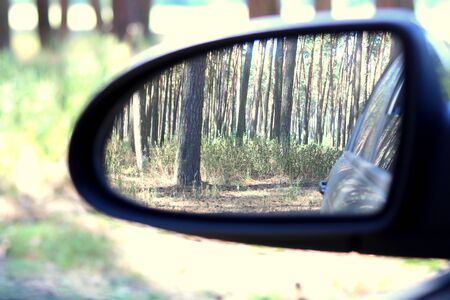 Car mirror with image of summer pine forest
