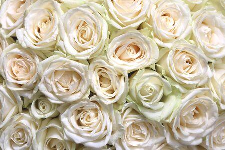 白いバラの花束と自然な花の背景 写真素材