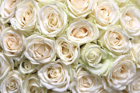 Natural floral background with bouquet of white roses Banco de Imagens
