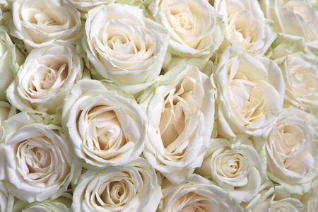 Sfondo floreale naturale con bouquet di rose bianche