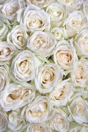 Natural floral background with bouquet of white roses
