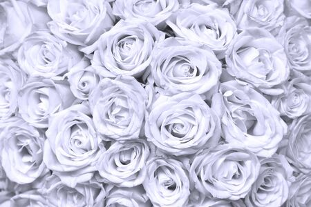 absract floral background with bouquet of roses