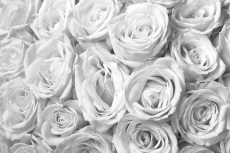 Black and white background with beautiful white roses 版權商用圖片