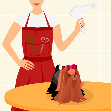 Beautiful yorkshire terrier is sitting on the table with a hairdresser Vector